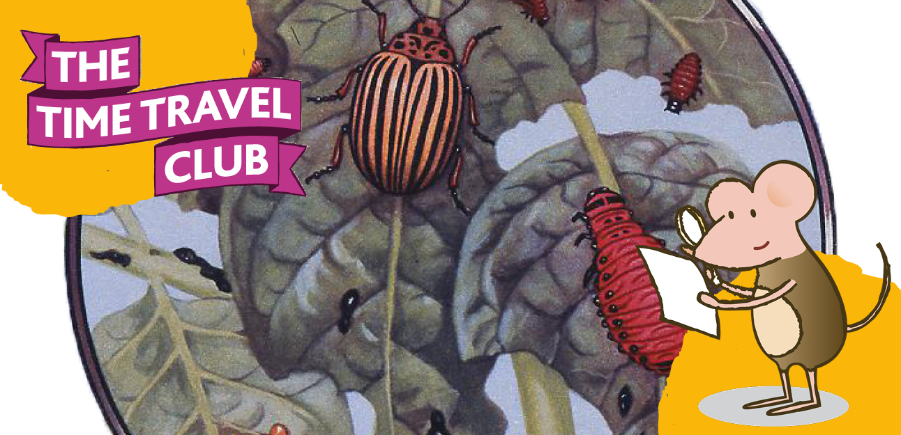 The Time Travel Club: A Bug's Eye View