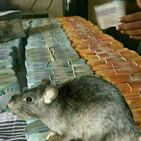 Amazing money spells and magic wallets +27738317777 Pietermaritzburg,  Howick,  Estcourt,  Hluhluwe