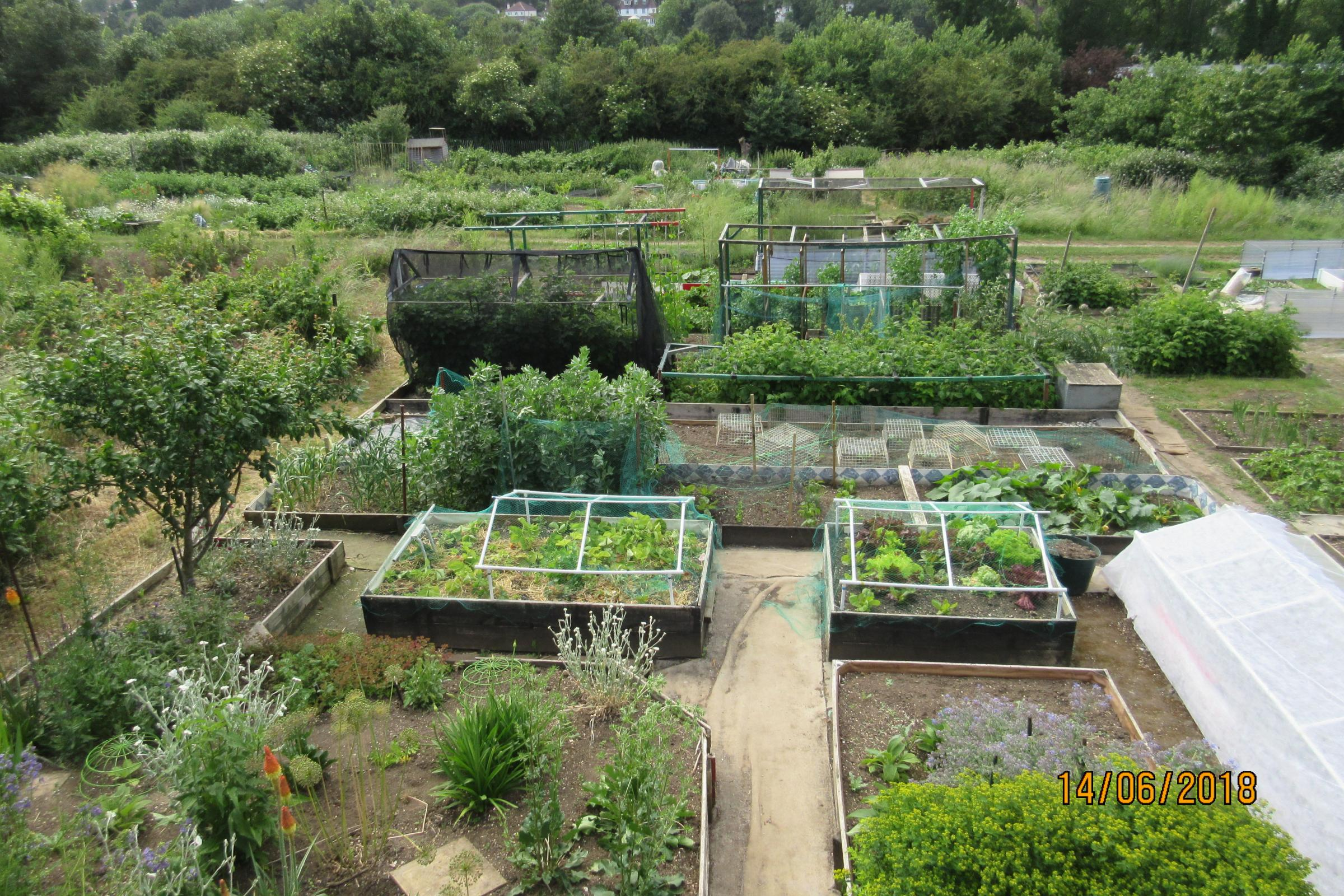 Croydon allotments to benefit from £350k improvement programme