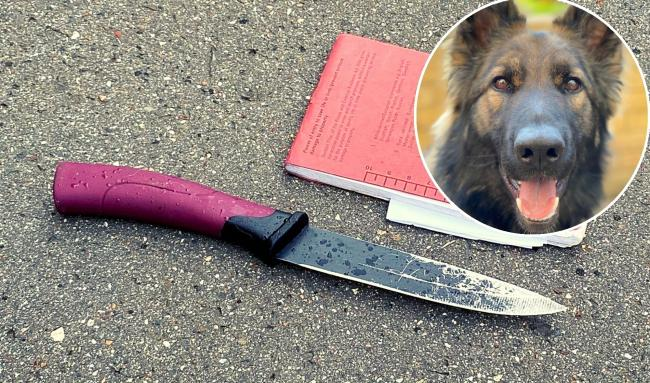Police Dog Rose helped catch a man who fled from police and dropped a knife during the chase.