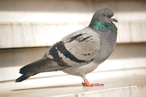 Families spitting feathers over pigeon droppings