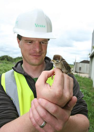 RSPB's Richard Black tagging one of the birds at the sewage treatment site