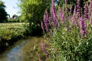 What is Wandle Valley Regional Park?