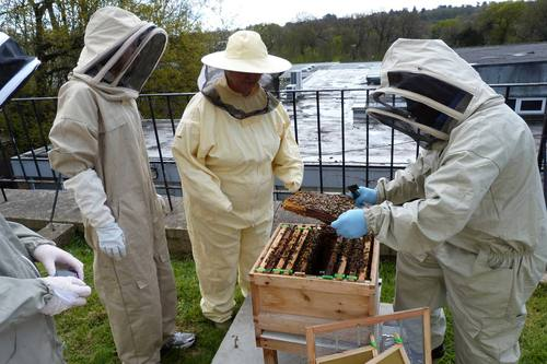 Bee-ing careful: Tina Corr and Joseph Ezuanyamike from Kingston University attend to their swarm