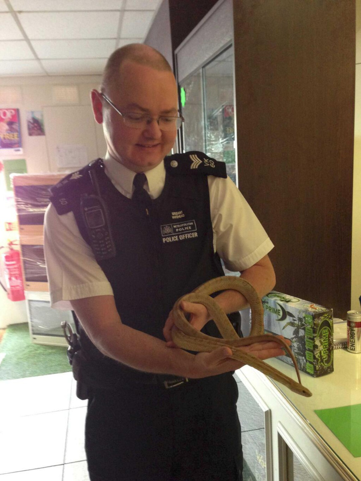 Captured: the harmless corn snake was apprehended by Sgt Bob Whitehead of Kingston police