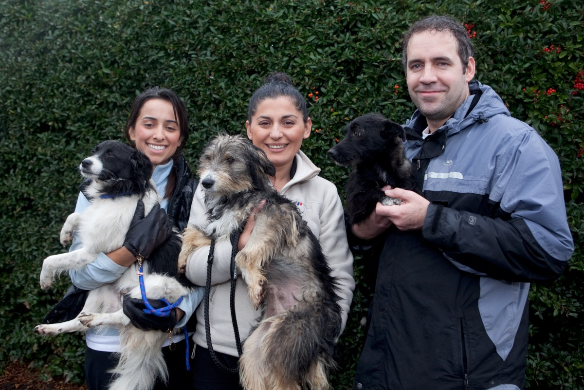 New homes: Soraya Radford, 28, from Hampton, Bagdat Ozz, 33, and Iain Lee, 33, with some of the dogs