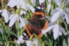 Fluttering by: A red admiral