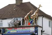 Shop must apply for planning permission or remove giraffes, elephant and zebra