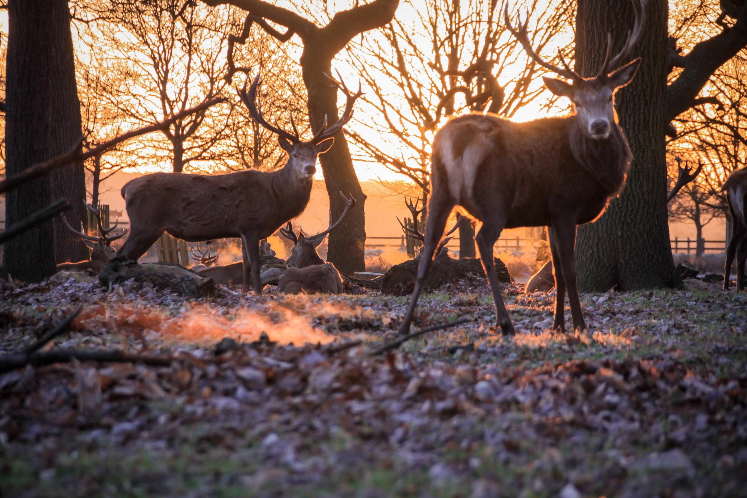 Lovely deer: A popular fixture in the park