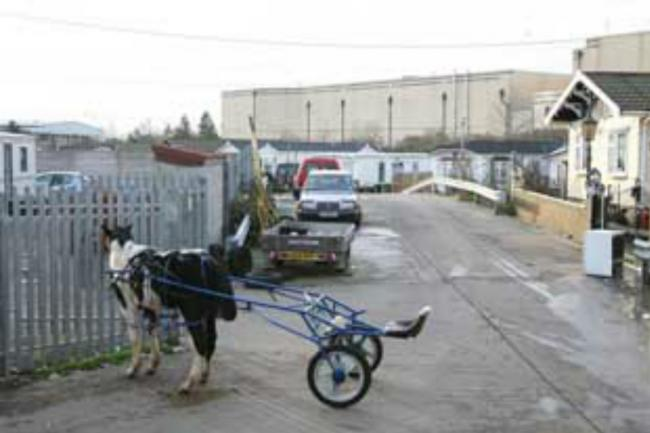 Croydon's only has one traveller site, at Latham's Way in Broad Green