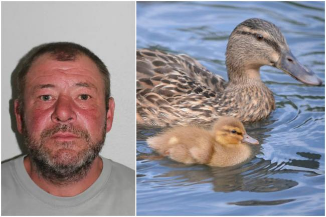 Robert Muir, left, was found guilty of killing a duck in plain sight