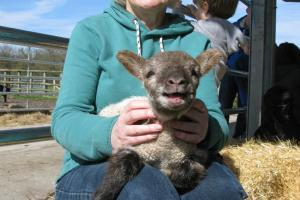 Visitors at the farm last weekend met some of the new arrivals (pic: Jo Saunders)