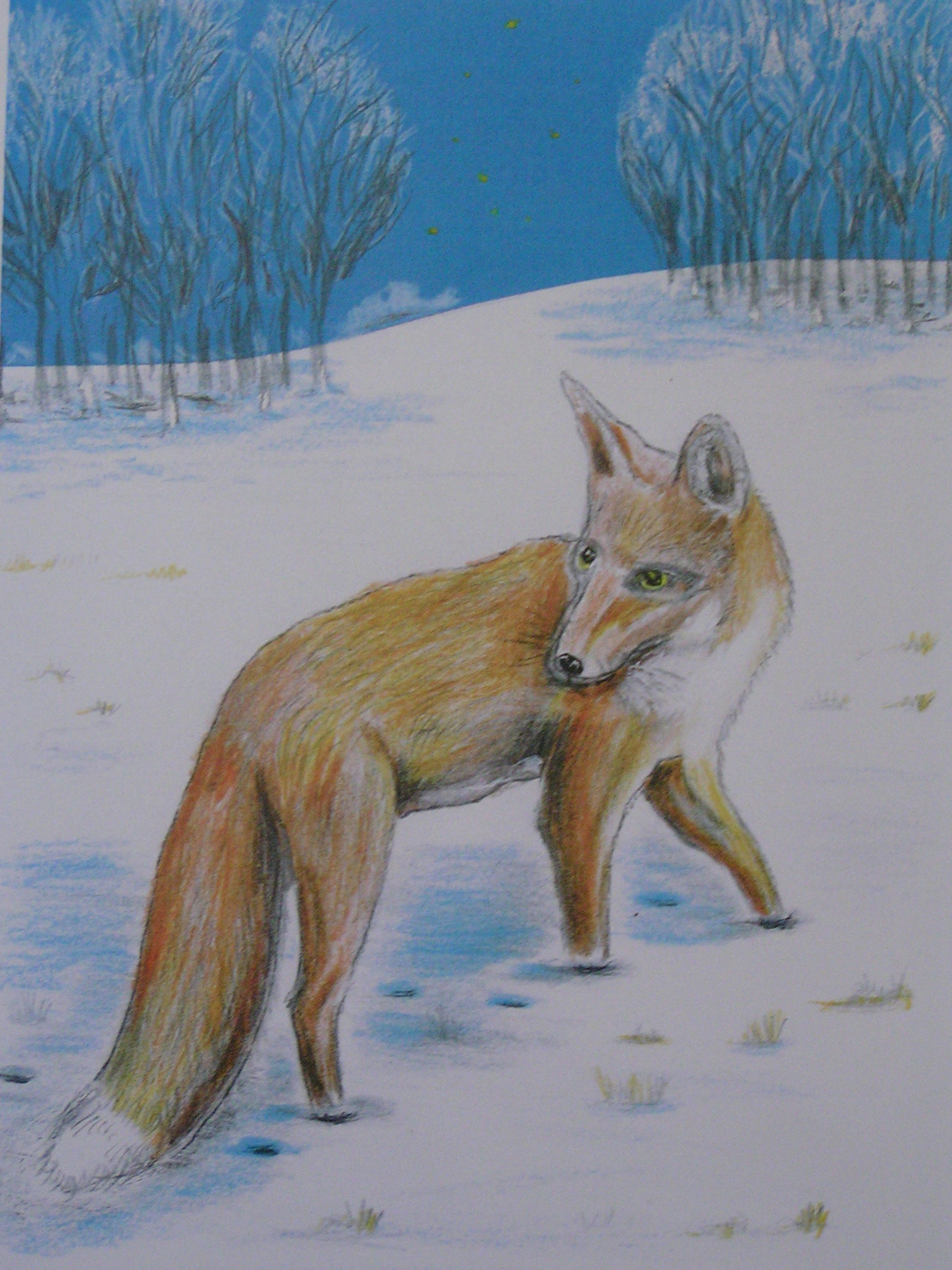 The urban fox is an emotive subject - you either love them or loathe them