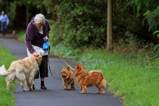 Merton dog walkers could be restricted to taking out a maximum of four dogs