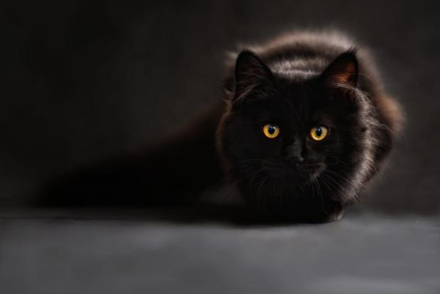 Your Local Guardian: Black cats are said to be unlucky.