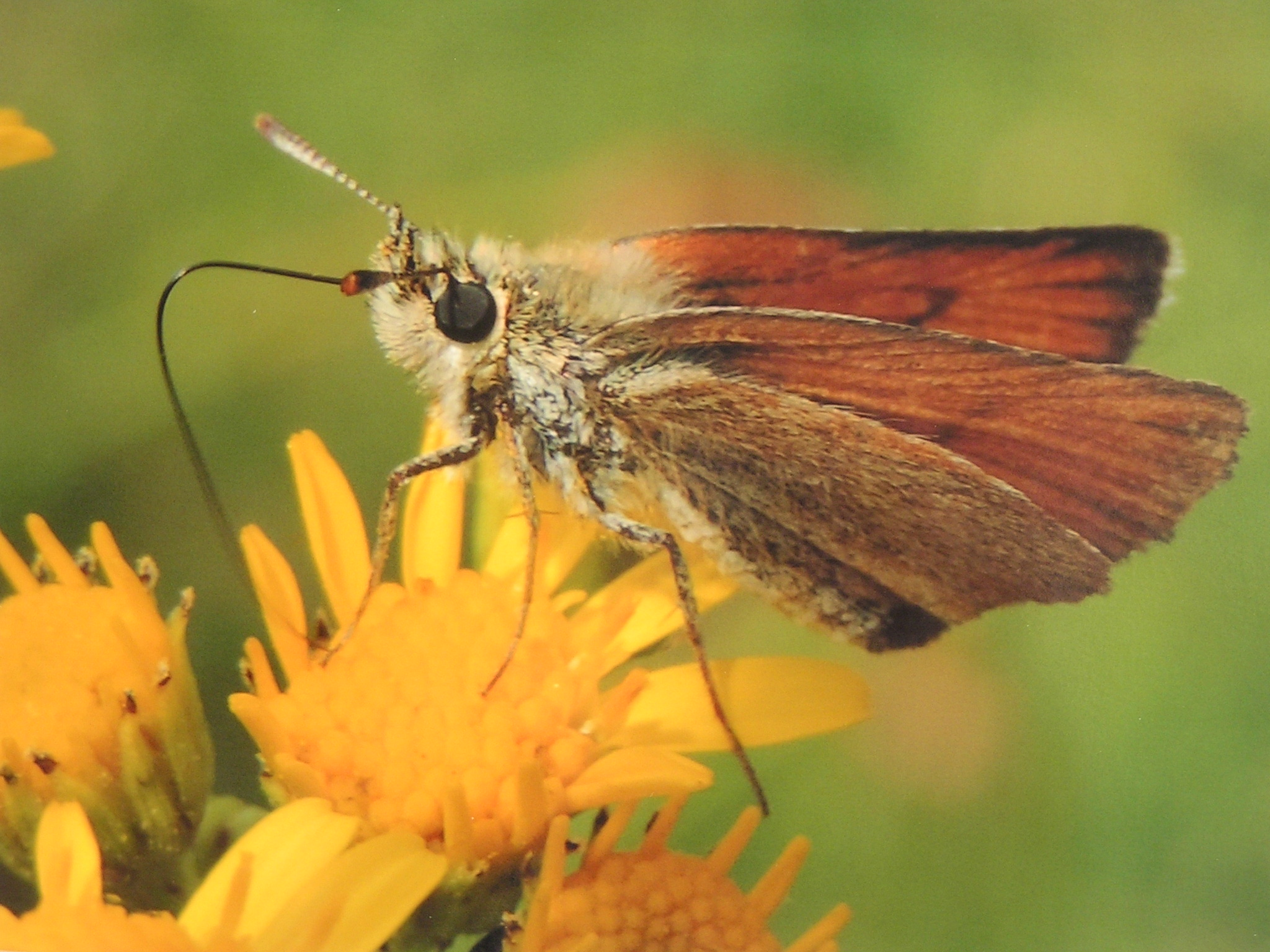 Number of butterflies sees a lull in the month of June