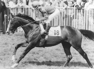 Your Local Guardian: MISSING: Shergar was kidnapped in 1983