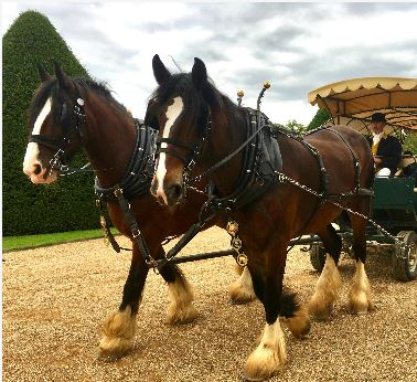 Festive Carriage Rides at Morden Hall Park