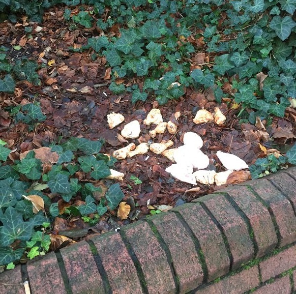 Chicken pieces found on November 30 in Francis Grove