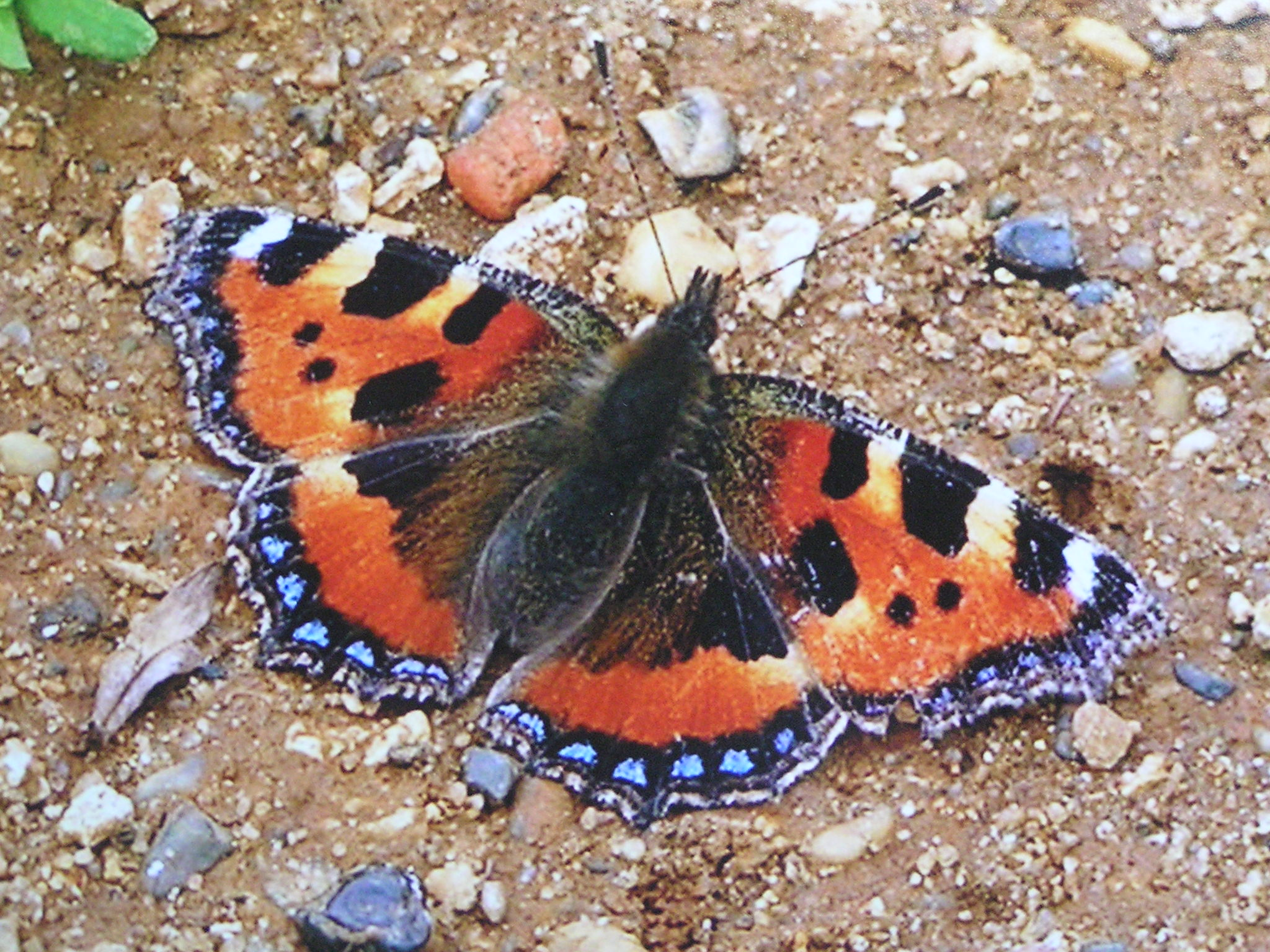 Today's youngsters do not get to enjoy the delights of butterflies compared with yesteryear
